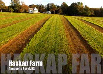 Haskap Farm Preview